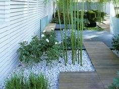 This minimalist garden design has understated style. A natural wood walkway meanders through bamboo plants that are companion planted with white flowers in marble mulch.