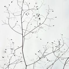 Tree #theiconicau #toietmoi
