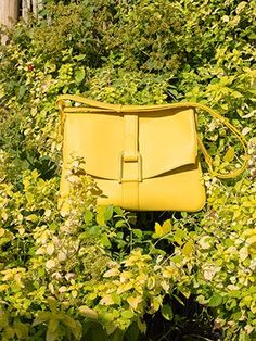 Givry, Polo : Mimosa | Delvaux