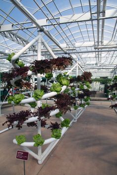 "Disney's Epcot Center ""The Land"" Exhibition, Orlando, Florida... Hydroponic NFT Lettuce Spirals"