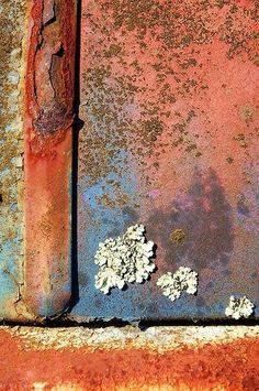 Beauty in decay, nature reclaiming space = Wabi-Sabi Lichen Descending Growth And Decay, Peeling Paint, Nature Artwork, Rusty Metal, Art Graphique, World Of Color, Texture Art, Abstract Photography, Wabi Sabi