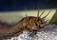 Barry the giant sea worm discovered by aquarium staff after mysterious attacks on coral reef #FreakyFriday
