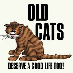 ~Senior cats are the last to be adopted at Shelters. They are often much-loved animals who have been surrendered because of death or economic difficulty. They are alone & scared & would like nothing more than to love & be loved again. Please adopt!~