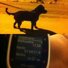 Onnistunut hidas lenkki (Run like a moose - Hirveetä menoa) Moose, Running, Animals, Racing, Animais, Animales, Animaux, Elk, Keep Running