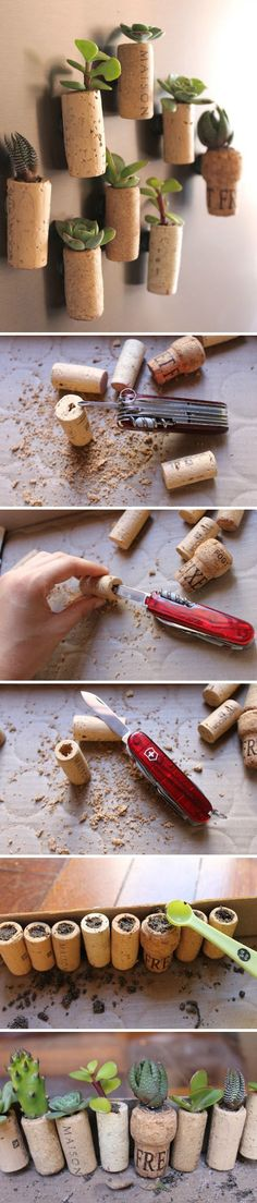 Diy magnets. Succulents & corks. I have to do this with my succulents!