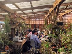 our design studio has temporarily moved to a greenhouse this week for a research…