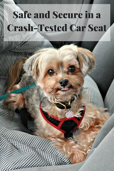 Car safety with Pupsaver: The only crash-tested car booster seat for dogs. {sponsored}