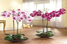 Orchids with beautiful flowers in various colors are wonderful house plants for elegant and sophisticated home decorating