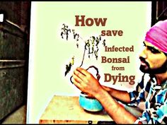 How to save Infected Bonsai from dying
