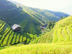 Rizieres en terrasses de Longji Sud Chine