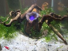 Aquarium Nano Vulkan - Höhle mit LED - Deko - Garnelen - Versteck - | eBay
