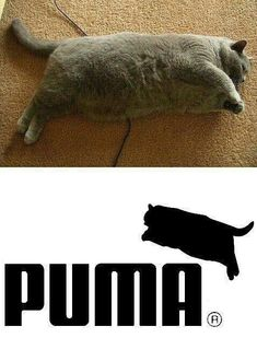 ha I feel so bad for this cat  it's not his fault he's so fat. Poor little, opps poor big kitty..