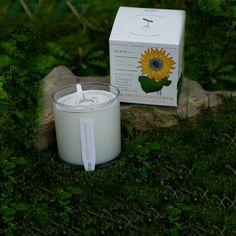 nicerworld.com - KOBO Candles - Seeds Collection - Sweet Sunflower