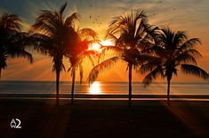 Beautiful Palm Trees Beach at Sunset Personalized Postcard Sunset Color Palette, Sunset Colors, Boxing Day, Et Wallpaper, Sunrise Wallpaper, Nature Wallpaper, Cidades Do Interior, Palm Trees Beach, Sunset Beach