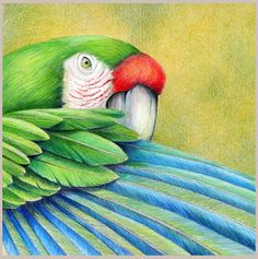"Contemporary Artists of Florida: Contemporary Colorful Animal Art ""Parrot 1"" The Art of Nature, Fine Art by Mindy Lighthipe"