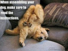 When assembling your dog, make sure to read the instructions ~ LOL!