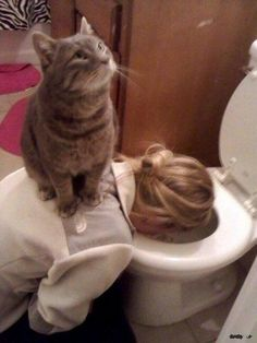 #Cats don't care if you're hung over.