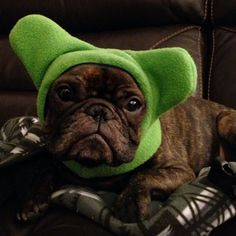 BatHat Sport - fleece hat with neck-warmer for big bat ears - great for Frenchies, Corgis, and other big-eared dogs on Etsy, $22.00