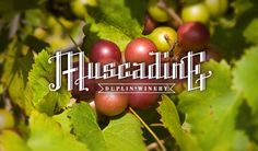 The scuppernong, a type of muscadine grape, is the official state fruit of North Carolina and the sweet wines produced from it are cherished. Nc Lighthouses, North Carolina Lighthouses, North Carolina Homes, North Carolina Attractions, Sweet Wine, I Want To Travel, Things To Know, Wine Country, Good To Know