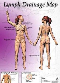 lymphedema drainage | ... lymphatic drainage massage for edema and manual lymphatic drainage