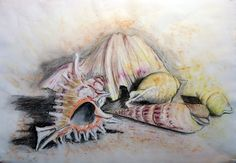 Pastel and pencil drawing of shells