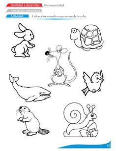 dibujos para colorear lateralidad a la derecha - Buscar con Google