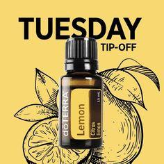 http://guysuseoils2.tumblr.com/post/141497318336/tuesday-tip-lemon-essential-oil
