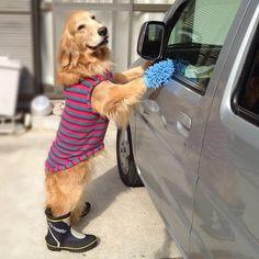 Cutest Car Wash Ever