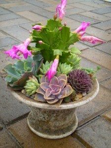 Love the Christmas cactus in here!   I can do this with the top of my old fountain.