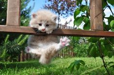 An orange kitten attempting to climb on to a wooden ledge.