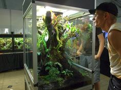 fake tree in terrarium tank