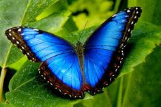 کون چپ چاپ در آیا ہے نظر میں نیناں میں تو سنتی تھی دبے پاؤں سحر آتی ہےl Beauty is a Butterfly.