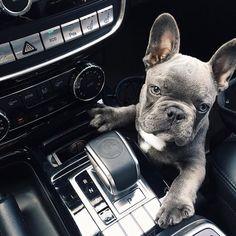 start the engine dude lets go to petsmart photo via nathangraburn