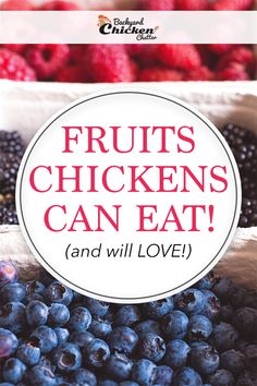 So, what are the fruits that chickens can eat? I always enjoy feeding my backyard chickens on a variety of foods Chicken Snacks, Chicken Eating, Canned Chicken, Backyard Chicken Coop Plans, Chicken Garden, Chickens Backyard, Urban Chickens, Pet Chickens, Keeping Chickens