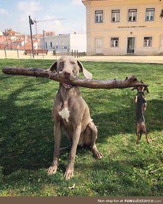 Rottweiler-hund-alu-video-schild-15x10 Bis 30 X 20 Cm-türschild-alarm-warnschild Produkte HeißEr Verkauf Dekoration Haustierbedarf