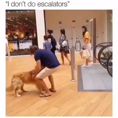 Doggo doesn't do magical moving stairs - Cutest Baby Animals Funny Animal Memes, Cute Funny Animals, Cute Baby Animals, Funny Cute, Cute Cats, Funny Dogs, Memes Br, Dog Memes, Puppy Pictures