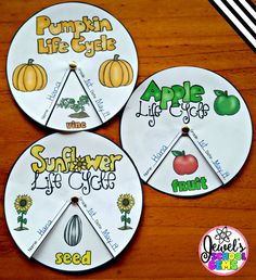 This Plant Life Cycle Wheel Bundle is the perfect activity to help your students review what they have learned about the life cycle of apples, pumpkins, and sunflowers.
