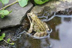 Garten Frosch Ueberhoff
