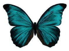 24 X Stunning Turquoise Colour Butterflies Edible Decorations Cup Cake Toppers #ebay #Home & Garden