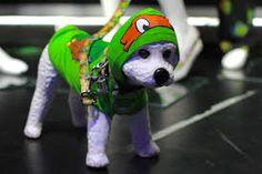 Image result for ninja turtle dog accessories