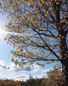Natureza, primavera, Alemanha, voz  sustentabilidade, voz interior, slow living, holistic view, simplify. Slow Living, Clouds, Interior, Outdoor, Sustainability, Nature, Outdoors, Indoor, Interiors
