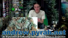 CRITICAL KUSH 't Keteltje Coffeeshop   Amsterdam Weed Review