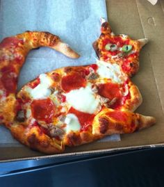cat pizza hahahaha