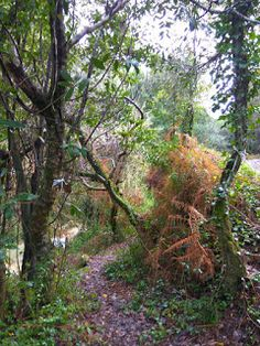 A Toca da Grila II: Cascata de Quiaios /Quiaios Waterfall