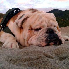 Pennichella in spiaggia