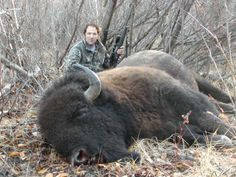 buffalo hunting in oregon Tacoma World, Hunting Rifles, Big Game, Wild Birds, Archer, Outdoor Camping, Buffalo, Oregon, Weird