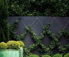 25 small garden design ideas A small yard shouldn't be uninspiring. Learn how to transform what little space you have into an urban oasis by getting on board with vertical gardens, climbing vines and potted feature plants. Design Jardin, Small Gardens, Vertical Gardens, Small Garden Design, Small Garden Ideas Privacy, Small Garden Trees, Cool Garden Ideas, Small Garden Oasis, Garden Design Ideas