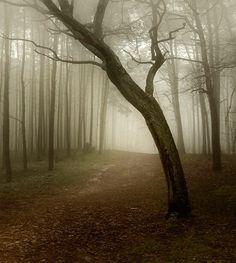 fog - null