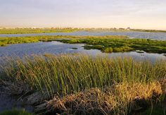 Rietvlei Wetland Reserve in Milnerton, Cape Town. There is a large freshwater wetland on the floodplain of the Diep River where it flows into the . River Bath, Photoshop, Game Reserve, Biomes, Nature Reserve, Park, Cape Town, Ecology, Habitats