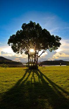 My tree by Nah Photograph, via 500px - Kaeng Krachan National Park, Thailand.